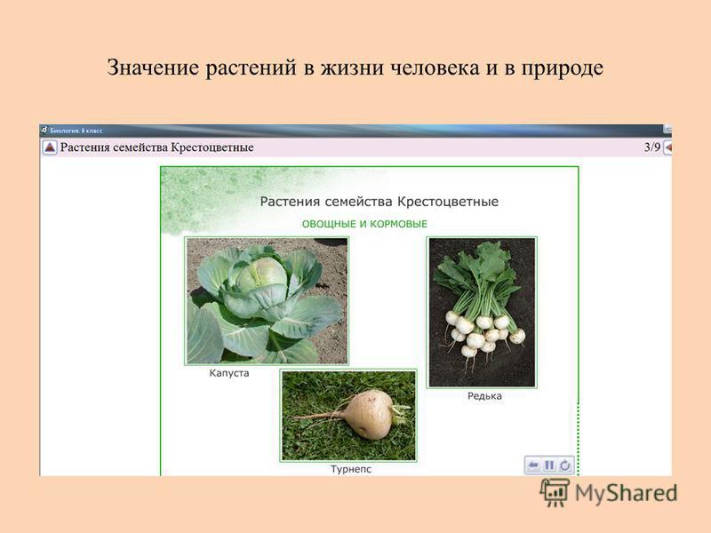 Значение растений в жизни человека и в природе