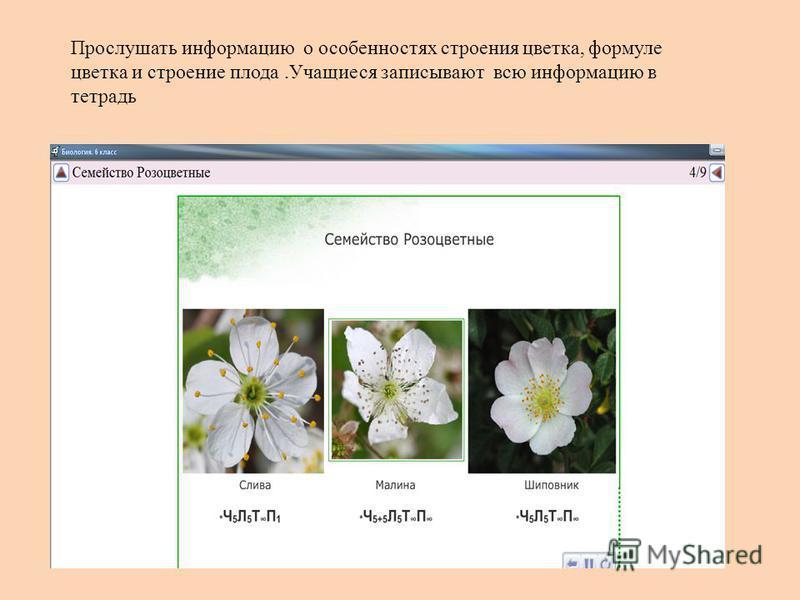 Прослушать информацию о особенностях строения цветка, формуле цветка и строение плода.Учащиеся записывают всю информацию в тетрадь
