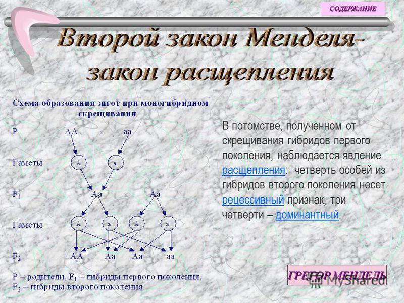 Моногибридное скрещивание Задачи Словарь Человек и генетика Третий закон Менделя Второй закон Менделя