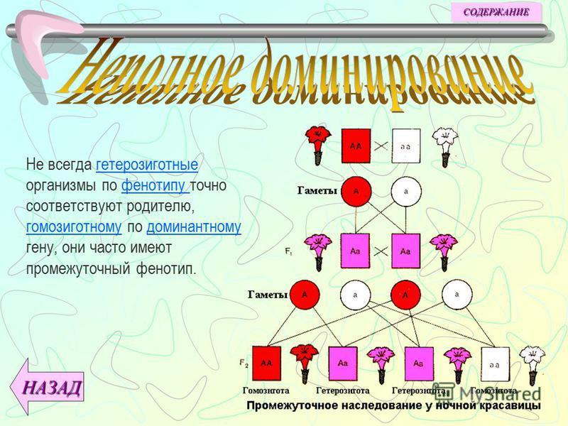 Анализирующее скрещивание используется для определения генотипа по фенотипу. Для этого особь,генотип которой следует определить, скрещивают с особями, гомозиготными по рецессивному гену. генотипафенотипугомозиготнымирецессивному ДАЛЕЕ НАЗАД СОДЕРЖАНИ