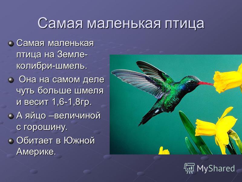 Самая маленькая птица Самая маленькая птица на Земле- колибри-шмель. Она на самом деле чуть больше шмеля и весит 1,6-1,8 гр. Она на самом деле чуть больше шмеля и весит 1,6-1,8 гр. А яйцо –величиной с горошину. Обитает в Южной Америке.