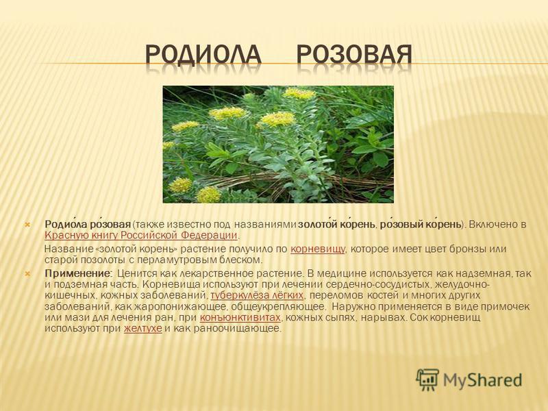 Родиола розовая (также известно под названиями золотой корень, розовый корень). Включено в Красную книгу Российской Федерации. Красную книгу Российской Федерации Название «золотой корень» растение получило по корневищу, которое имеет цвет бронзы или