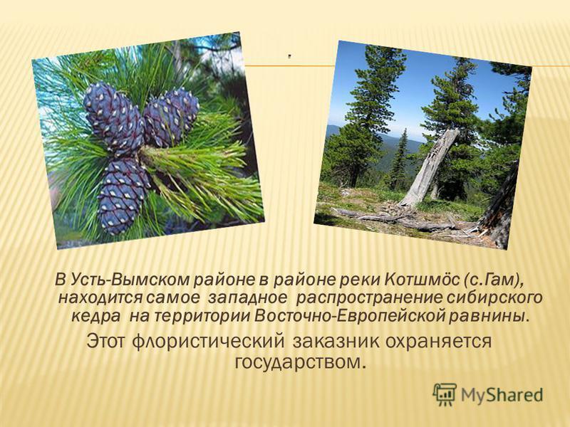 В Усть-Вымском районе в районе реки Котшмöс (с.Гам), находится самое западное распространение сибирского кедра на территории Восточно-Европейской равнины. Этот флористический заказник охраняется государством.