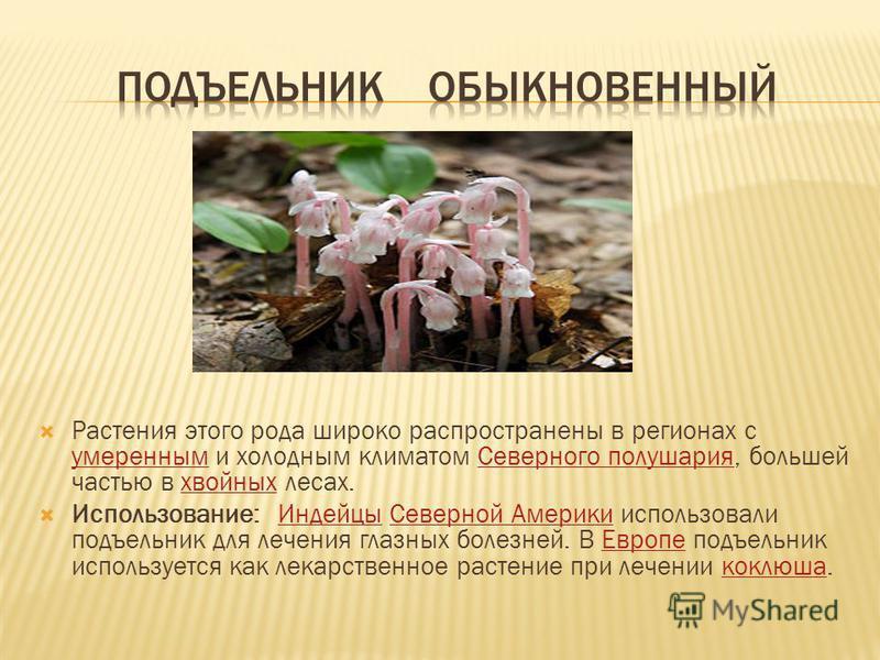 Растения этого рода широко распространены в регионах с умеренным и холодным климатом Северного полушария, большей частью в хвойных лесах. умеренным Северного полушария хвойных Использование: Индейцы Северной Америки использовали подъельник для лечени
