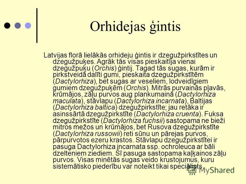 Orhidejas ģintis Latvijas florā lielākās orhideju ģintis ir dzegužpirkstītes un dzegužpuķes. Agrāk tās visas pieskaitīja vienai dzegužpuķu (Orchis) ģintij. Tagad tās sugas, kurām ir pirkstveidā dalīti gumi, pieskaita dzegužpirkstītēm (Dactylorhiza),