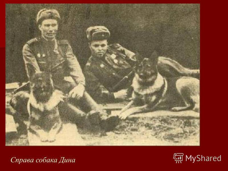 Справа собака Дина