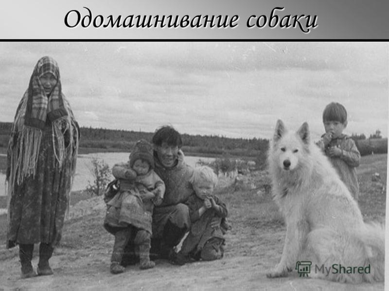 Одомашнивание собаки
