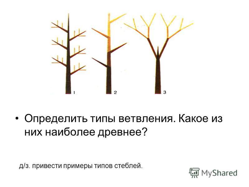 Определить типы ветвления. Какое из них наиболее древнее? д/з. привести примеры типов стеблей.