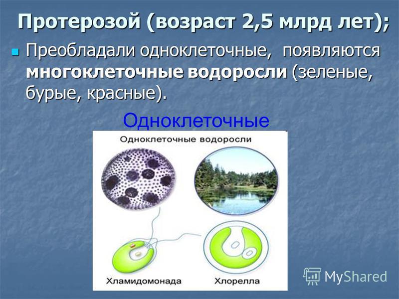 Протерозой (возраст 2,5 млрд лет); Преобладали одноклеточные, появляются многоклеточные водоросли (зеленые, бурые, красные). Преобладали одноклеточные, появляются многоклеточные водоросли (зеленые, бурые, красные). Одноклеточные