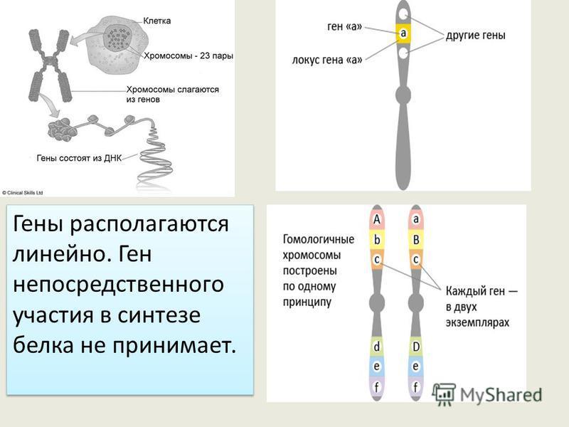 Анаболизм Белки являются необходимыми компонентами всех клеток, поэтому наиболее важным процессом пластического обмена является биосинтез белка. Ген – это участок молекулы ДНК, ответственный за синтез одной молекулы белка.