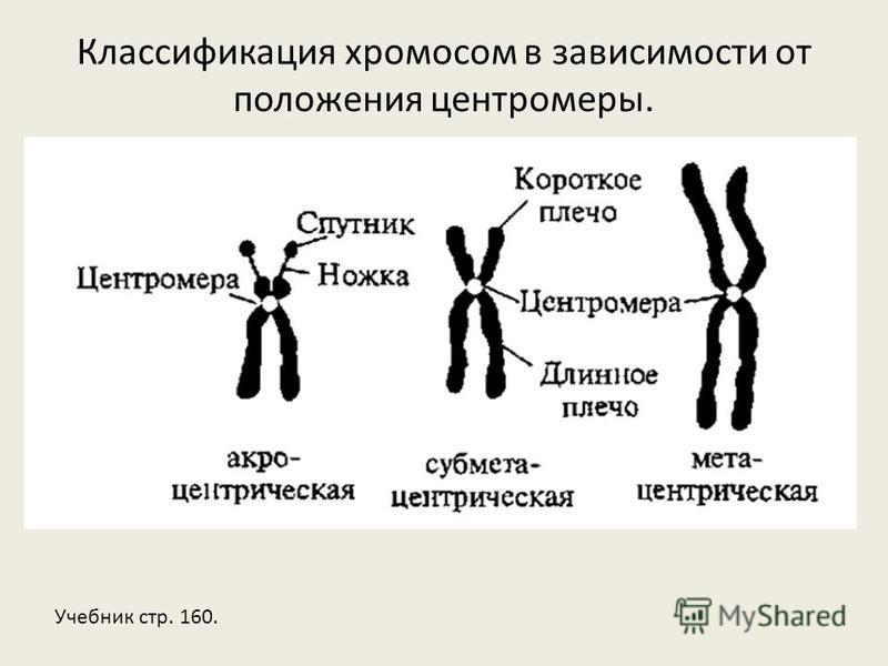 Классификация хромосом в зависимости от положения центромеры. Учебник стр. 160.