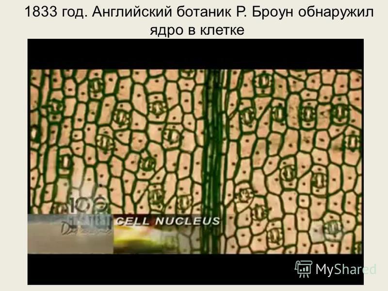 1833 год. Английский ботаник Р. Броун обнаружил ядро в клетке