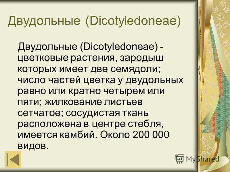 Двудольные (Dicotyledoneae) Двудольные (Dicotyledoneae) - цветковые растения, зародыш которых имеет две семядоли; число частей цветка у двудольных равно или кратно четырем или пяти; жилкование листьев сетчатое; сосудистая ткань расположена в центре с
