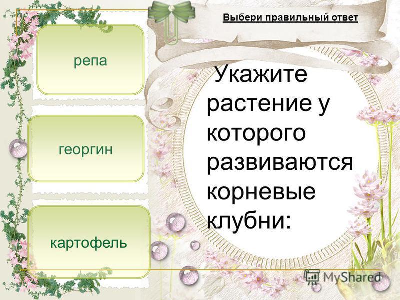 георгин репа картофель Укажите растение у которого развиваются корневые клубни: Выбери правильный ответ