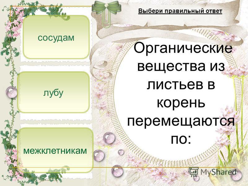 лубу сосудам межклетниккам Органические вещества из листьев в корень перемещаются по: Выбери правильный ответ
