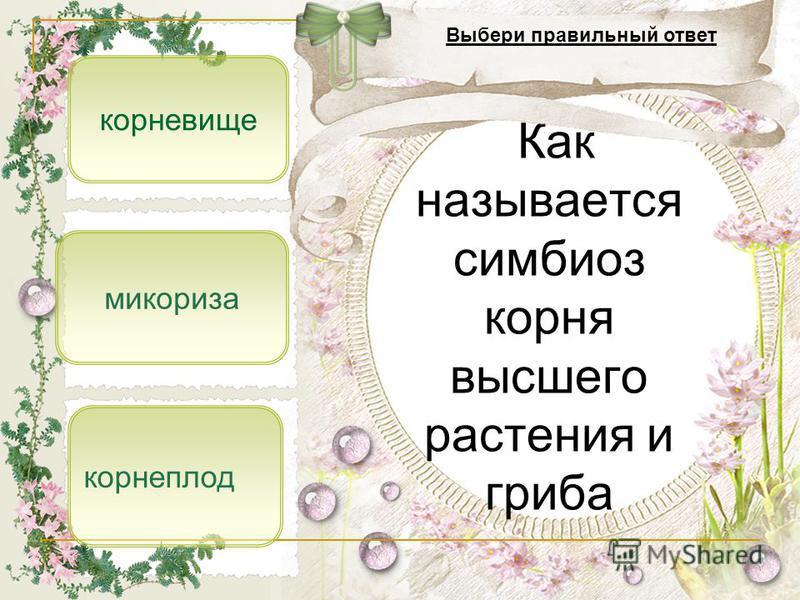 микориза корнеплод корневище Как называется симбиоз корня высшего растения и гриба Выбери правильный ответ