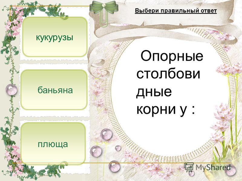баньяна плюща кукурузы Опорные столбовидные корни у : Выбери правильный ответ