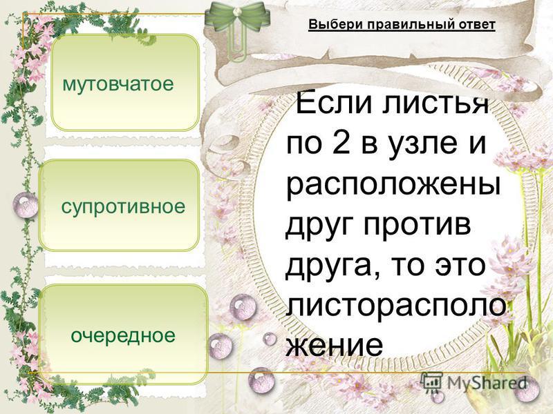 супротивное мутовчатое очередное Если листья по 2 в узле и расположены друг против друга, то это листорасположение Выбери правильный ответ