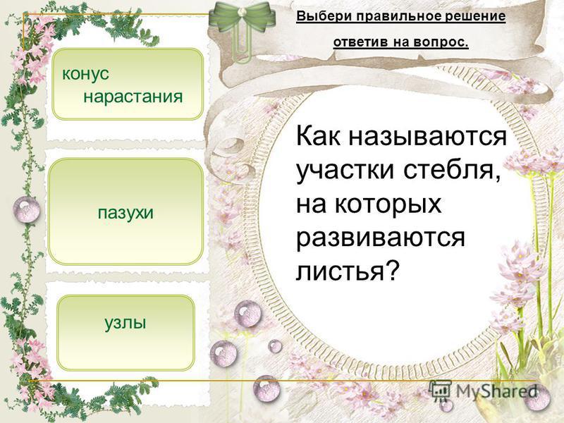 Как называются участки стебля, на которых развиваются листья? узлы конус нарастания пазухи Выбери правильное решение ответив на вопрос.