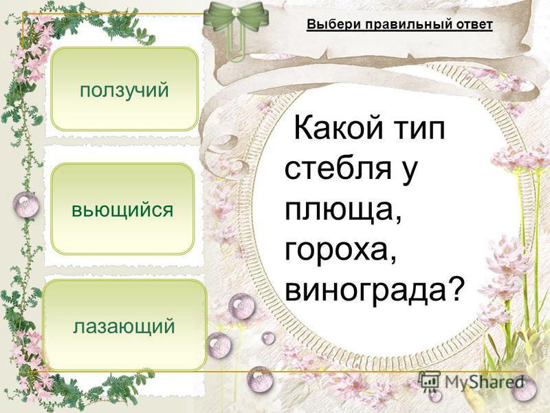 лазающий ползучий вьющийся Какой тип стебля у плюща, гороха, винограда? Выбери правильный ответ
