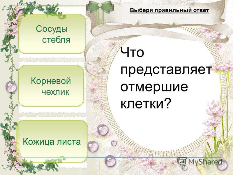 Сосуды стебля Корневой чехлик Кожица листа Что представляет отмершие клетки? Выбери правильный ответ
