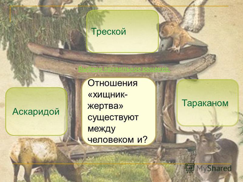 Треской Тараканом Аскаридой Отношения «хищник- жертва» существуют между человеком и? Выбери правильное решение.