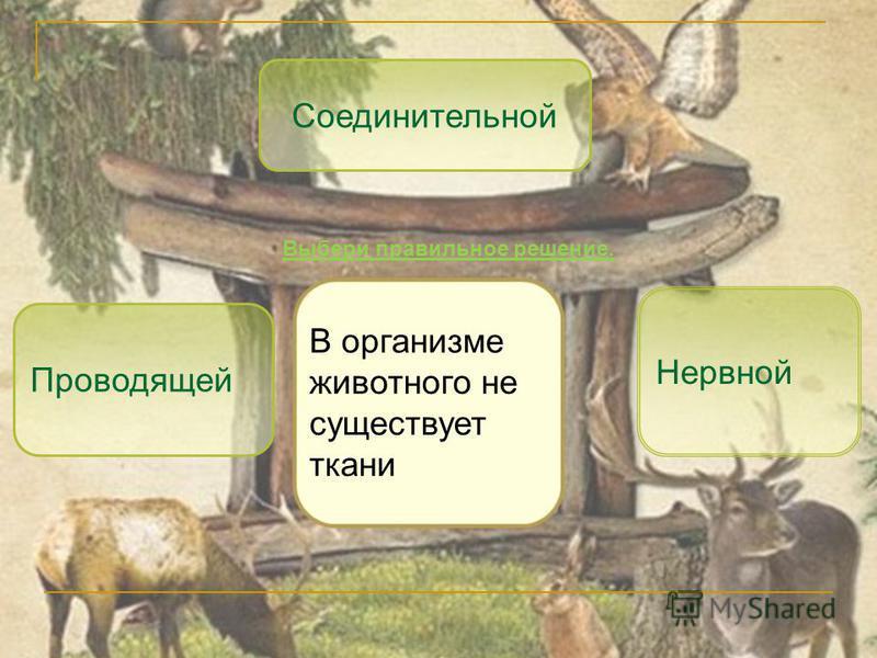 Проводящей Нервной Соединительной В организме животного не существует ткани Выбери правильное решение.