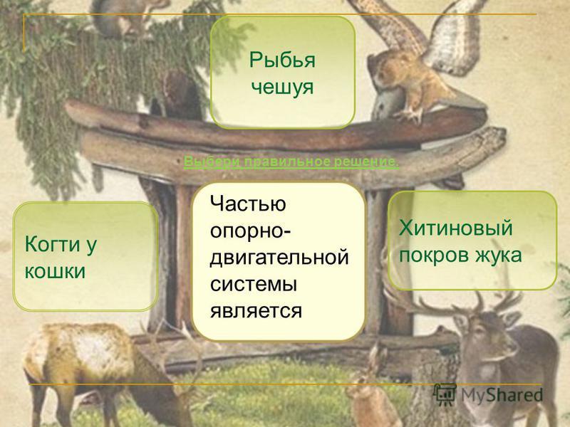 Хитиновый покров жука Когти у кошки Рыбья чешуя Частью опорно- двигательной системы является Выбери правильное решение.