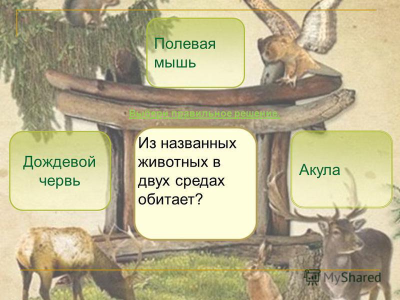 Полевая мышь Акула Дождевой червь Из названных животных в двух средах обитает? Выбери правильное решение.