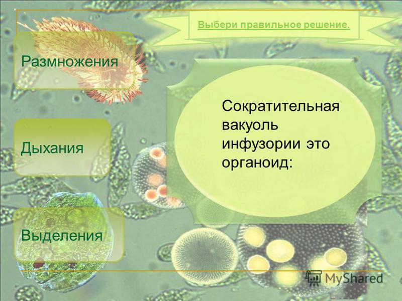 Сократительная вакуоль инфузории это органоид: Выделения Размножения Выбери правильное решение. Дыхания