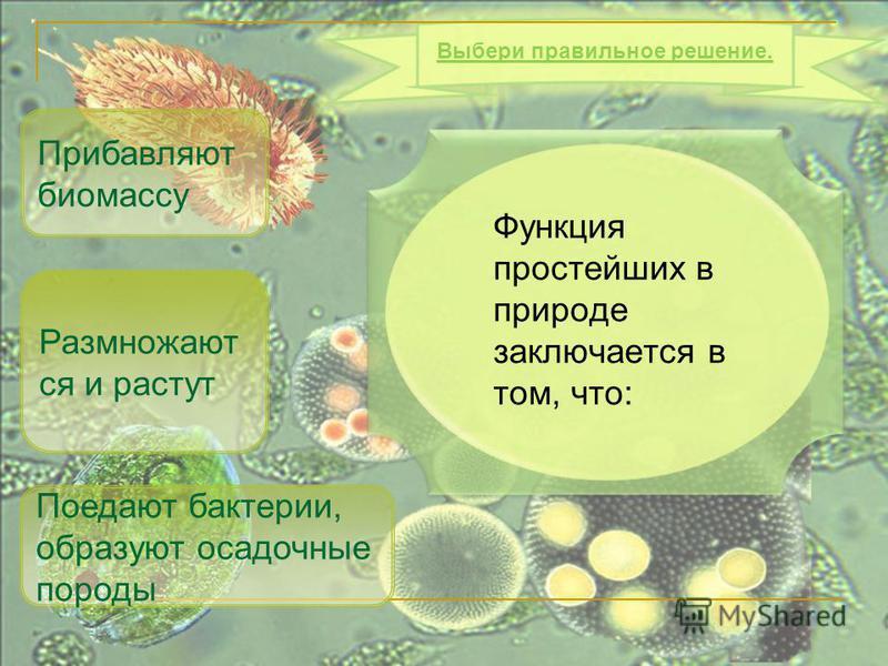Функция простейших в природе заключается в том, что: Поедают бактерии, образуют осадочные породы Прибавляют биомассу Выбери правильное решение. Размножают ся и растут