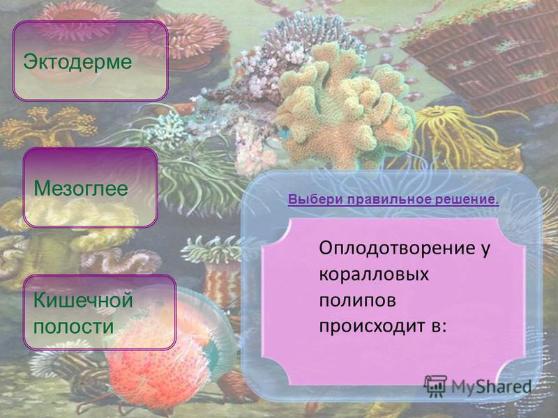 Оплодотворение у коралловых полипов происходит в: Кишечной полости Эктодерме Выбери правильное решение. Мезоглее