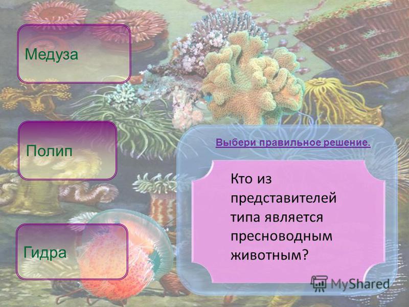 Кто из представителей типа является пресноводным животным? Гидра Медуза Выбери правильное решение. Полип