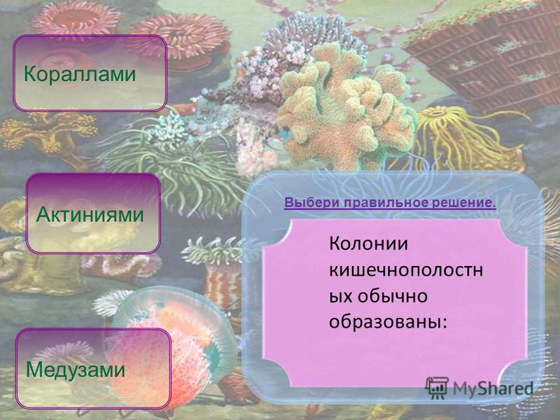 Колонии кишечнополостных обычно образованы: Кораллами Медузами Выбери правильное решение. Актиниями