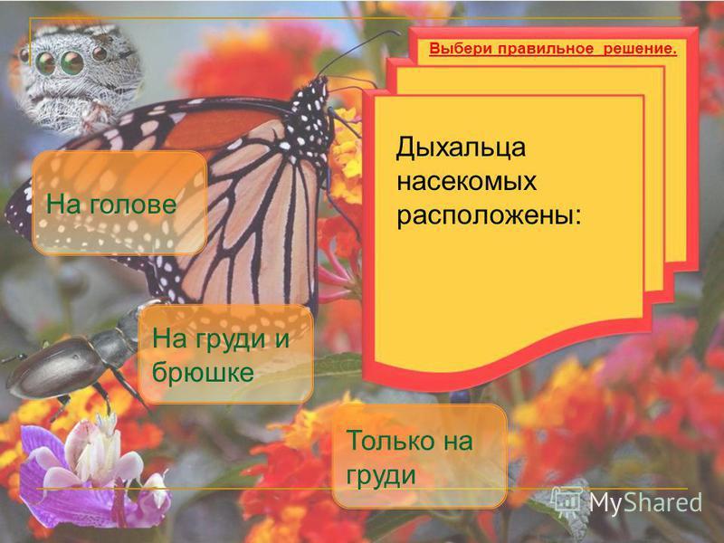 Дыхальца насекомых расположены: На груди и брюшке Только на груди Выбери правильное решение. На голове