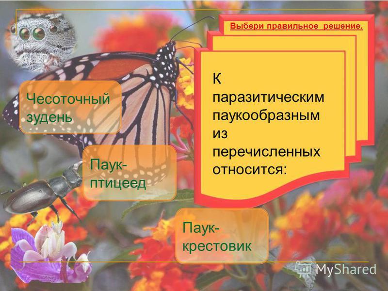 К паразитическим паукообразным из перечисленных относится: Чесоточный зудень Паук- птицеед Выбери правильное решение. Паук- крестовик