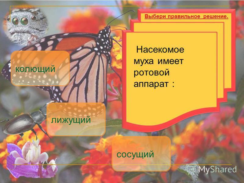 Насекомое муха имеет ротовой аппарат : лижущий сосущий Выбери правильное решение. колющий