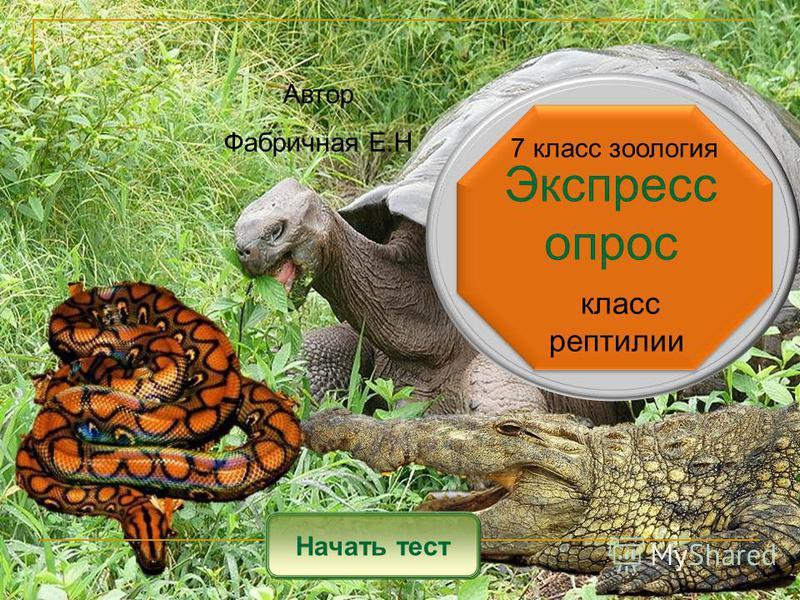Экспресс опрос Начать тест класс рептилии Автор Фабричная Е.Н 7 класс зоология