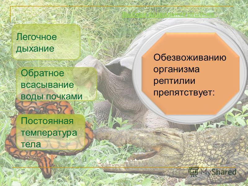 Обезвоживанию организма рептилии препятствует: Обратное всасывание воды почками Легочное дыхание Выбери правильное решение. Постоянная температура тела