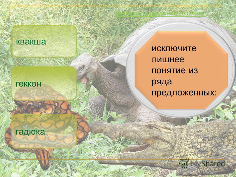 исключите лишнее понятие из ряда предложенных: квакша гадюка Выбери правильное решение. геккон