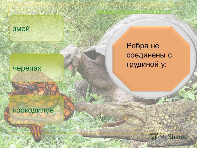 Ребра не соединены с грудиной у: змей крокодилов Выбери правильное решение. черепах