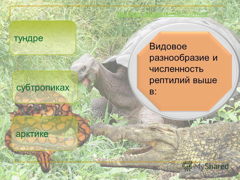 Видовое разнообразие и численность рептилий выше в: субтропиках арктике Выбери правильное решение. тундре