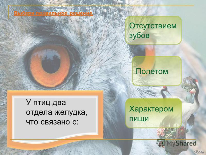 У птиц два отдела желудка, что связано с: Отсутствием зубов Полетом Выбери правильное решение. Характером пищи