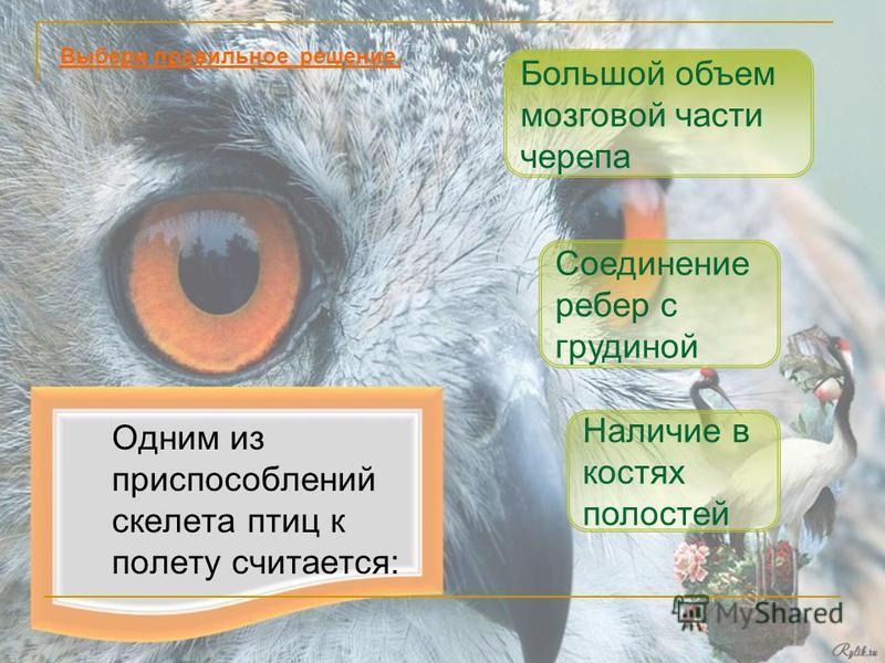 Одним из приспособлений скелета птиц к полету считается: Наличие в костях полостей Соединение ребер с грудиной Выбери правильное решение. Большой объем мозговой части черепа