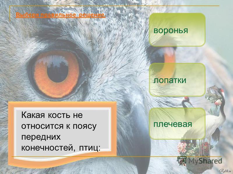 Какая кость не относится к поясу передних конечностей, птиц: плечевая лопатки Выбери правильное решение. воронья