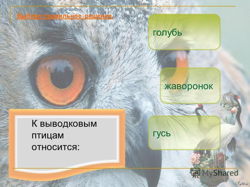 К выводковым птицам относится: гусь жаворонок Выбери правильное решение. голубь
