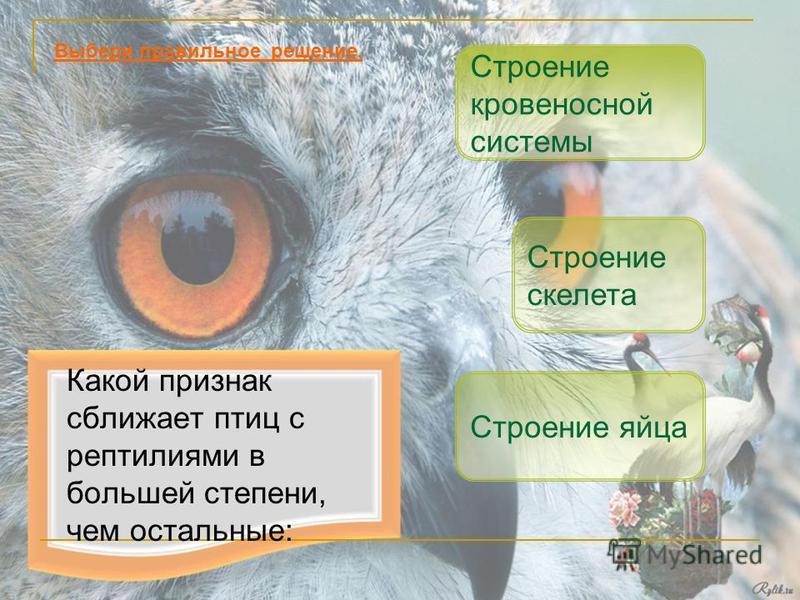 Какой признак сближает птиц с рептилиями в большей степени, чем остальные: Строение яйца Строение скелета Выбери правильное решение. Строение кровеносной системы