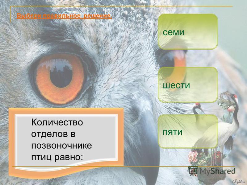 Количество отделов в позвоночнике птиц равно: пяти шести Выбери правильное решение. семи