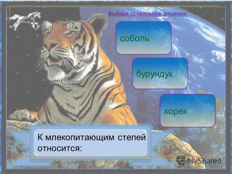 К млекопитающим степей относится: бурундук хорек Выбери правильное решение. соболь