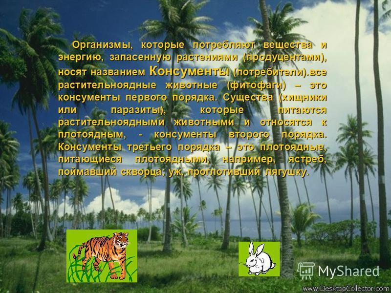 Организмы, которые потребляют вещества и энергию, запасенную растениями (продуцентами), носят названием Консументы (потребители).все растительноядные животные (фитофаги) – это консументы первого порядка. Существа (хищники или паразиты), которые питаю